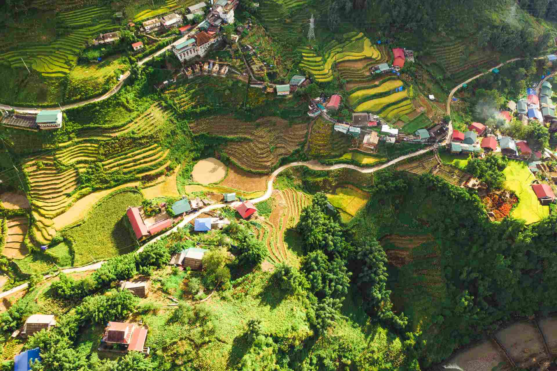 Sapa view from the sky seeing medicinal herbs