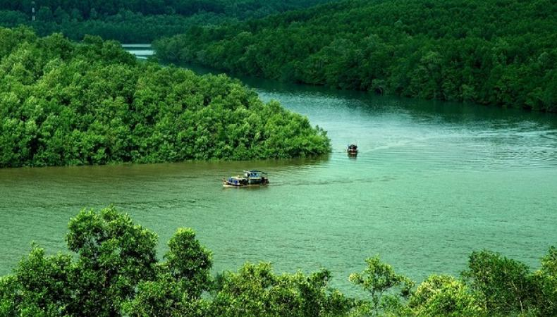 Can Gio Mangrove Forest: A Must-go Destination for Nature Lovers