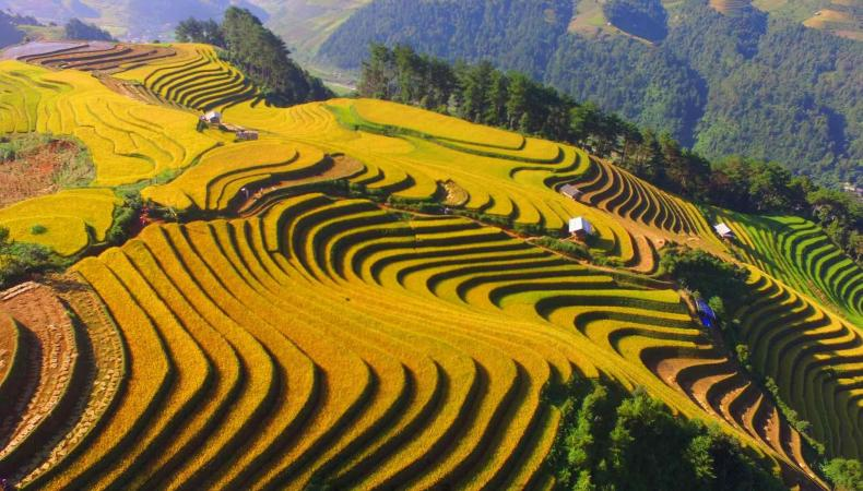 Tourism Programme To Attract More Visitors To Mu Cang Chai In Pouring-water Season
